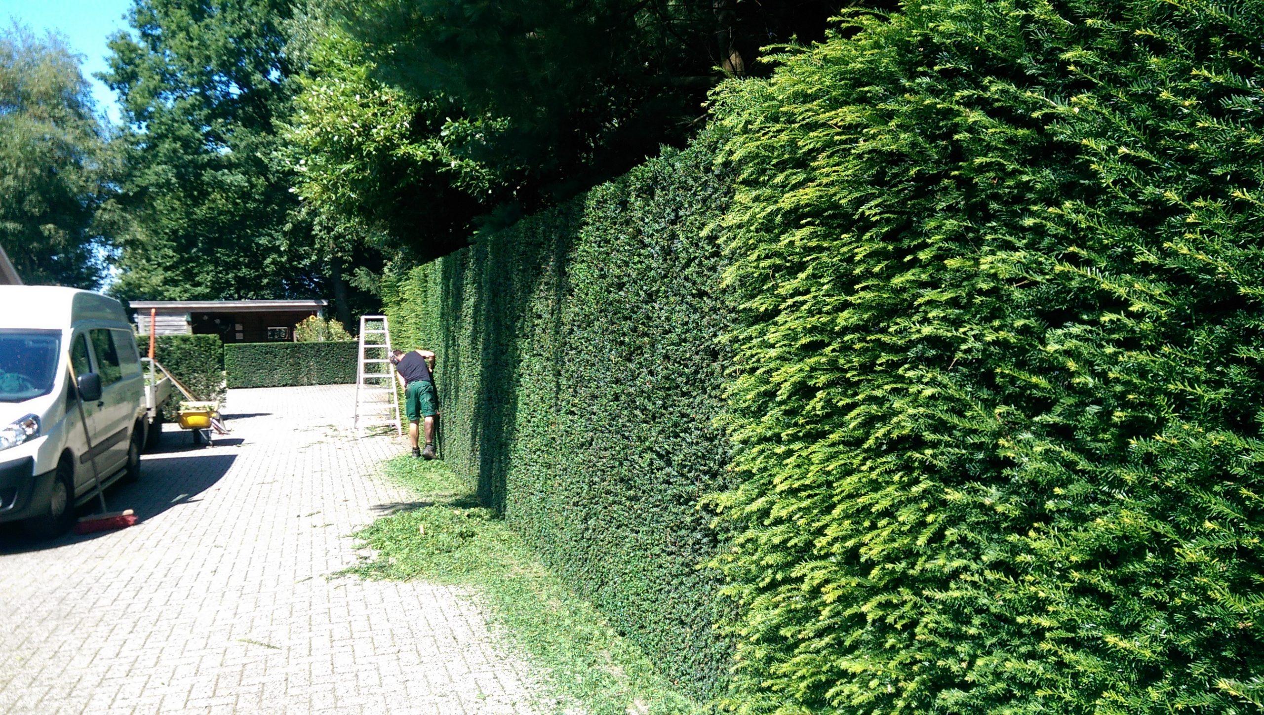 tuin boekelder 2